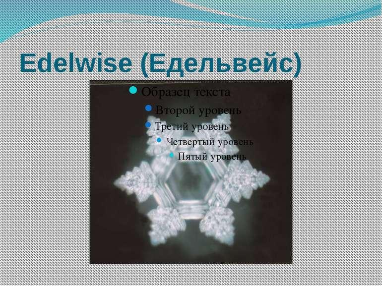 Edelwise (Едельвейс)