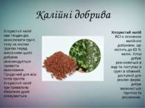 Калійні добрива Хлористий калій KCl є основним калійним добривом, що містить ...