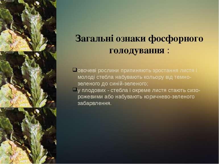 Загальні ознаки фосфорного голодування : овочеві рослини припиняють зростання...