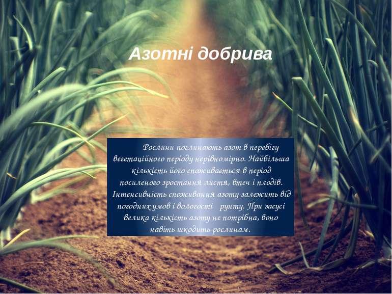 Азотні добрива Рослини поглинають азот в перебігу вегетаційного періоду нерів...