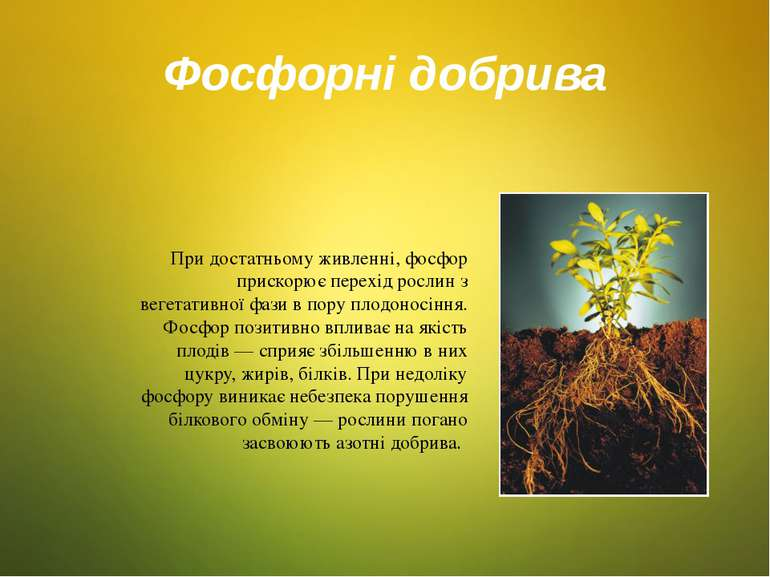 Фосфорні добрива При достатньому живленні, фосфор прискорює перехід рослин з ...