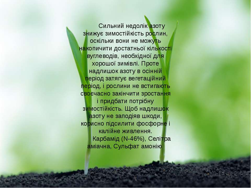 Сильний недолік азоту знижує зимостійкість рослин, оскільки вони не можуть на...