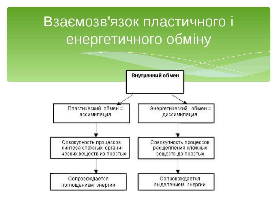 Гетеротрофна асиміляція відбувається в клітинах тварин, грибів, деяких бактер...