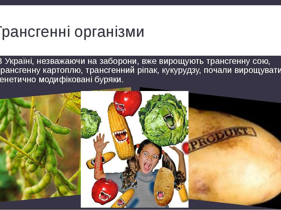 Трансгенні організми В Україні, незважаючи на заборони, вже вирощують трансге...