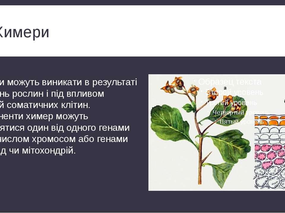 Химери Химери можуть виникати в результаті щеплень рослин і під впливом мутац...