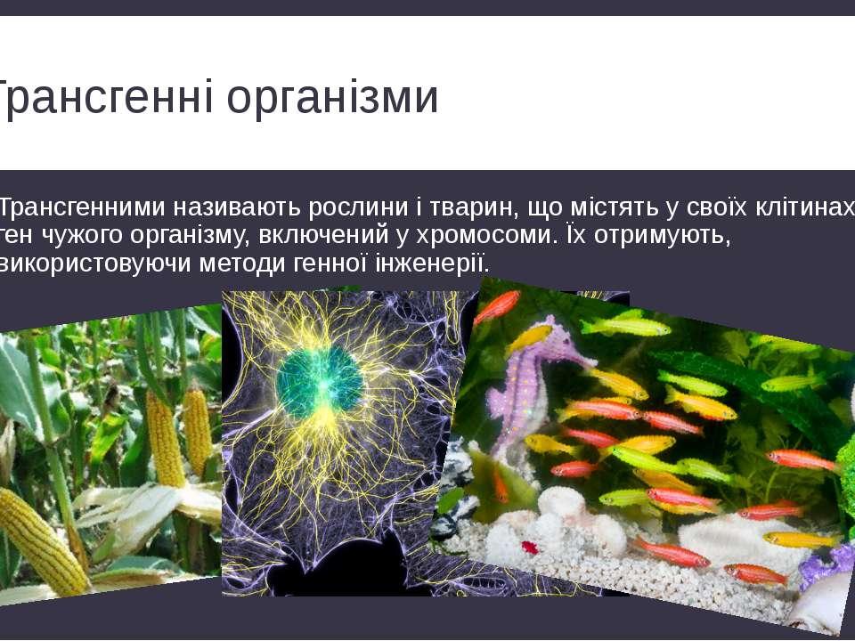Трансгенні організми Трансгенними називають рослини і тварин, що містять у св...