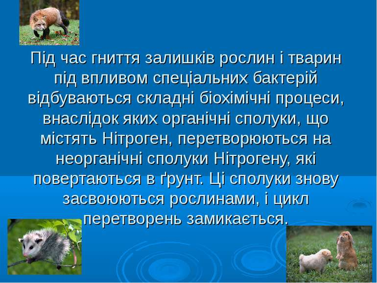 Під час гниття залишків рослин і тварин під впливом спеціальних бактерій відб...