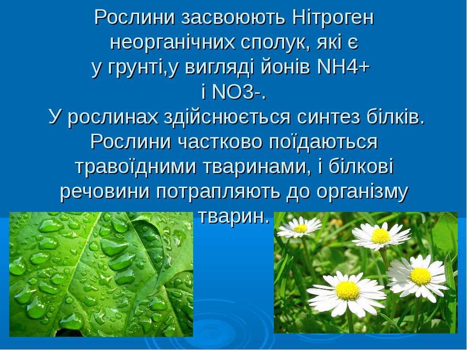 Рослини засвоюють Нітроген неорганічних сполук, які є у грунті,у вигляді йоні...