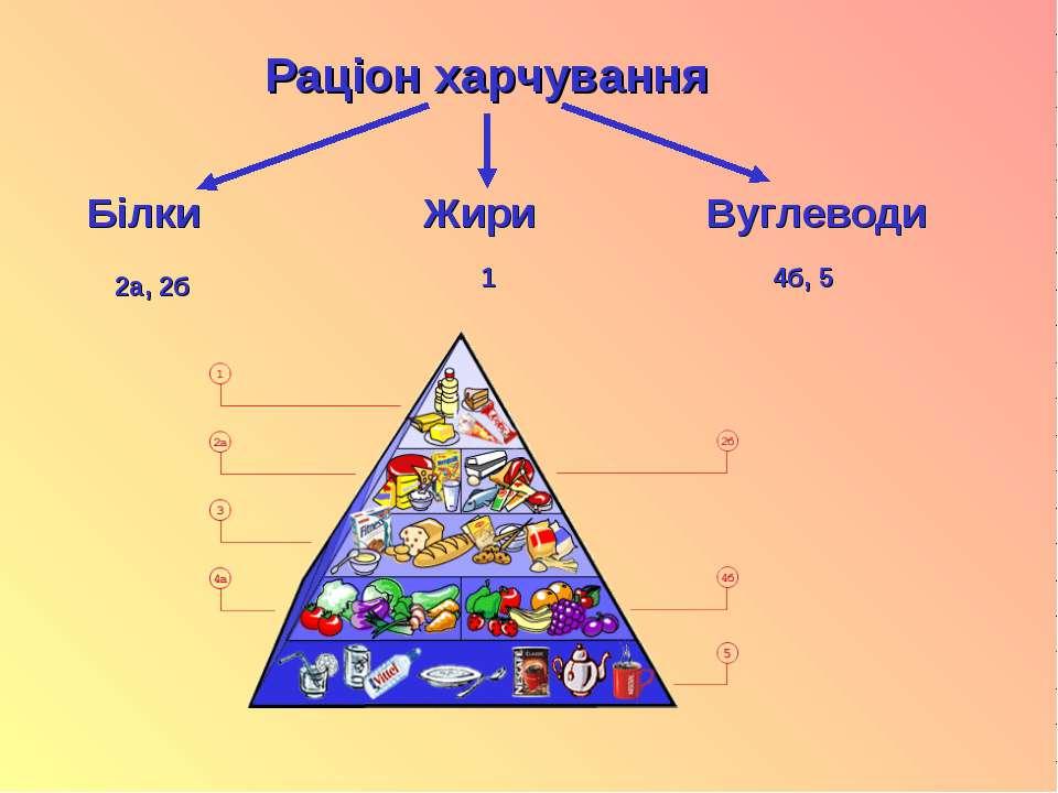 Раціон харчування Білки Жири Вуглеводи 2а, 2б 1 4б, 5