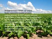 Вперше було встановлено, щоцукрові бурякизасвоюють поживні речовини протяго...