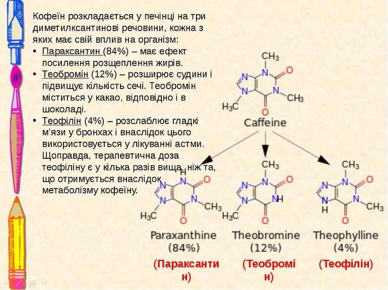 Кофеїн розкладається у печінці на три диметилксантинові речовини, кожна з яки...