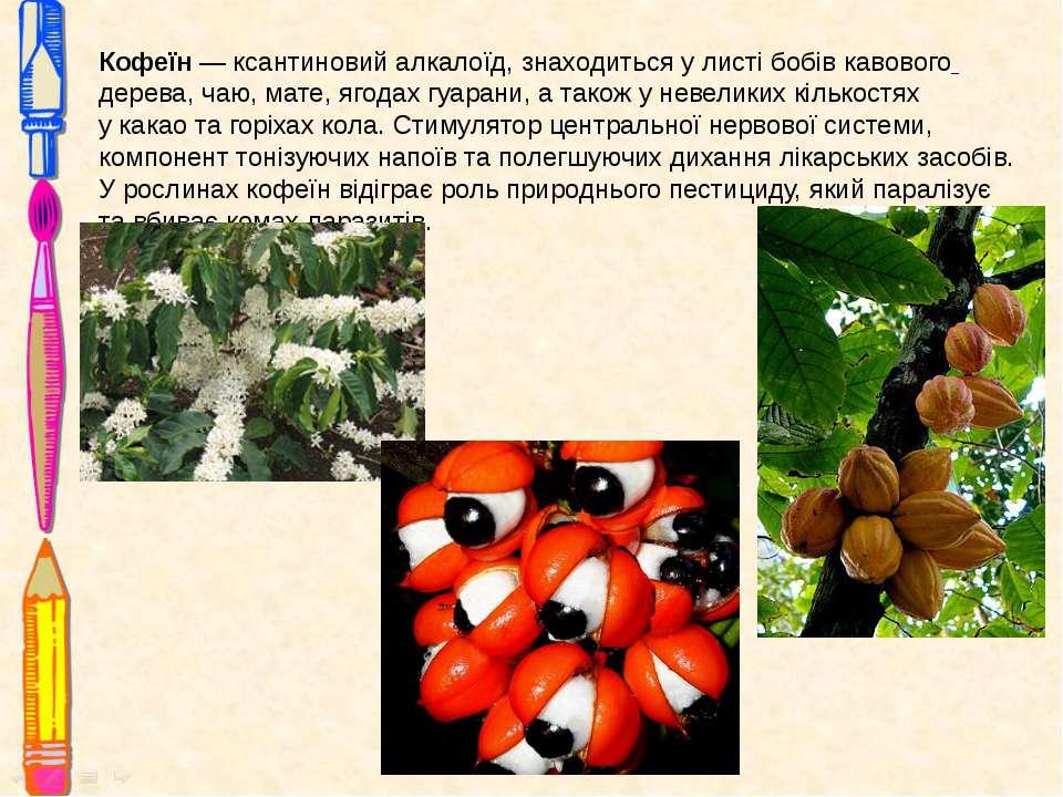 Кофеїн— ксантиновийалкалоїд, знаходиться у листі бобівкавового дерева,чаю...