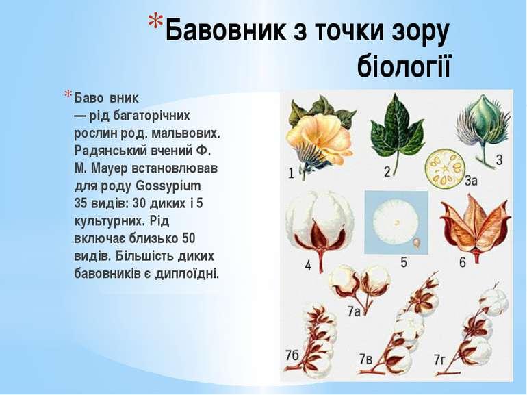 Бавовник з точки зору біології Баво вник —рідбагаторічних рослин род.мальв...