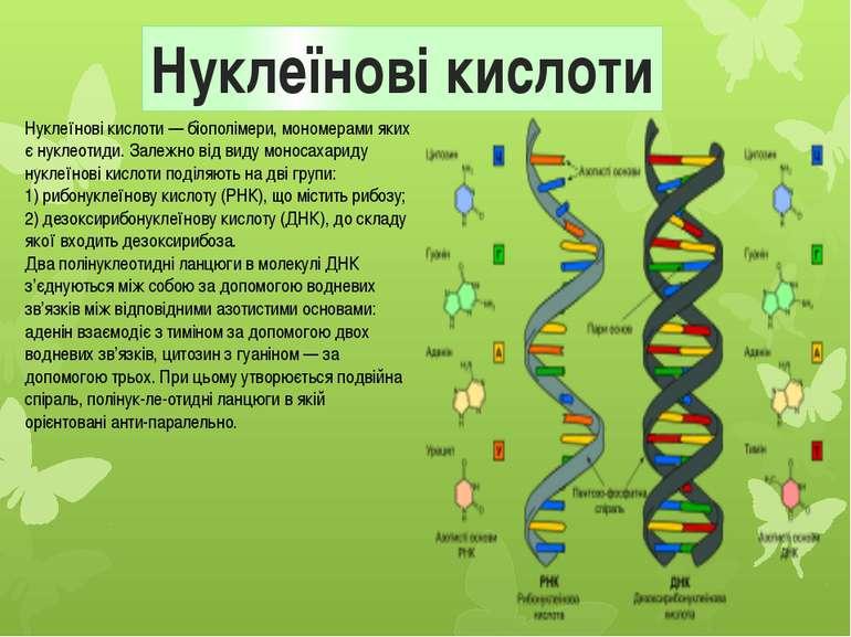 Нуклеїнові кислоти Нуклеїнові кислоти — біополімери, мономерами яких є нуклео...