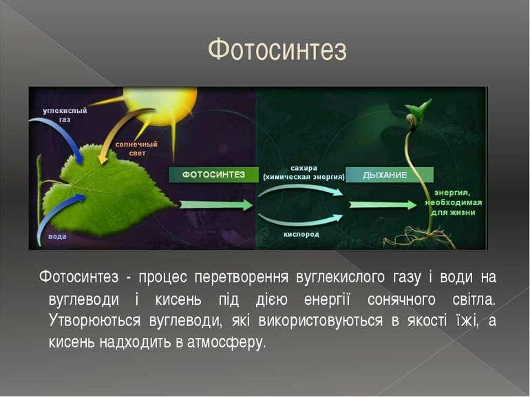 Фотосинтез Фотосинтез - процес перетворення вуглекислого газу і води на вугле...