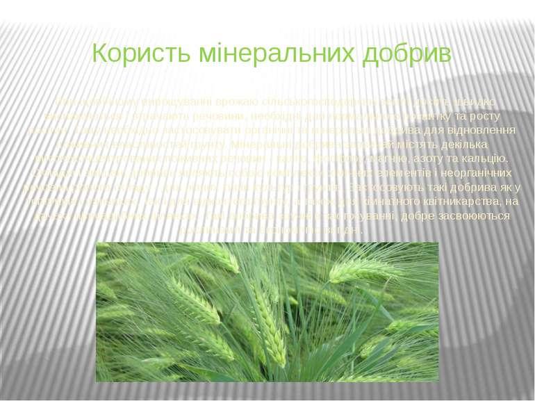 Користь мінеральних добрив При щорічному вирощуванні врожаю сільськогосподарс...