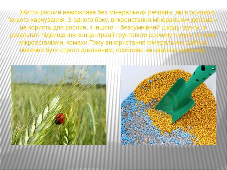 Життя рослин неможливе без мінеральних речовин, які є основою їхнього харчува...