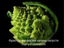 Фрактальна форма качана капусти сорту Романеско