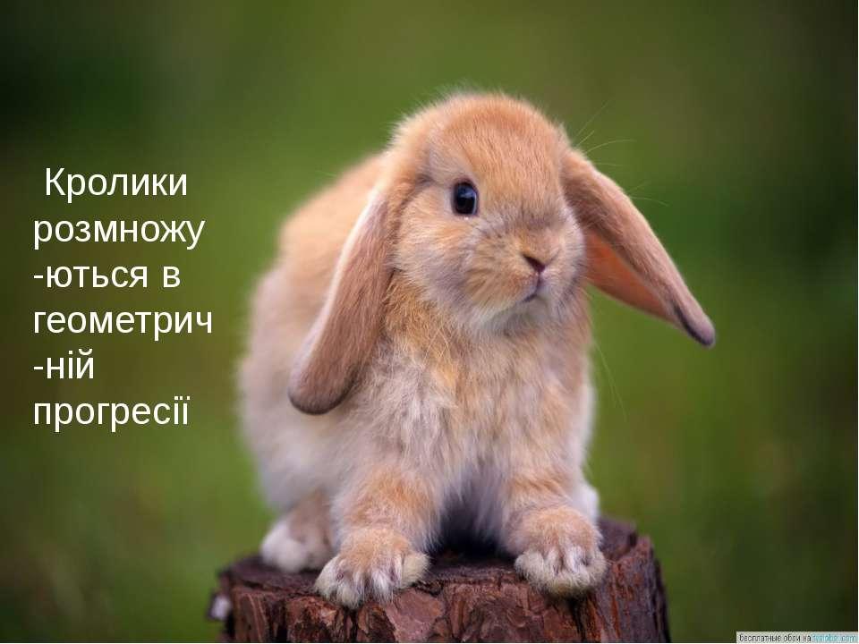 Кролики розмножу-ються в геометрич-ній прогресії
