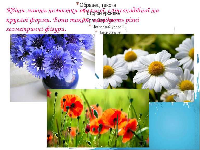 Квіти мають пелюстки овальної, еліпсоподібної та круглої форми. Вони також на...