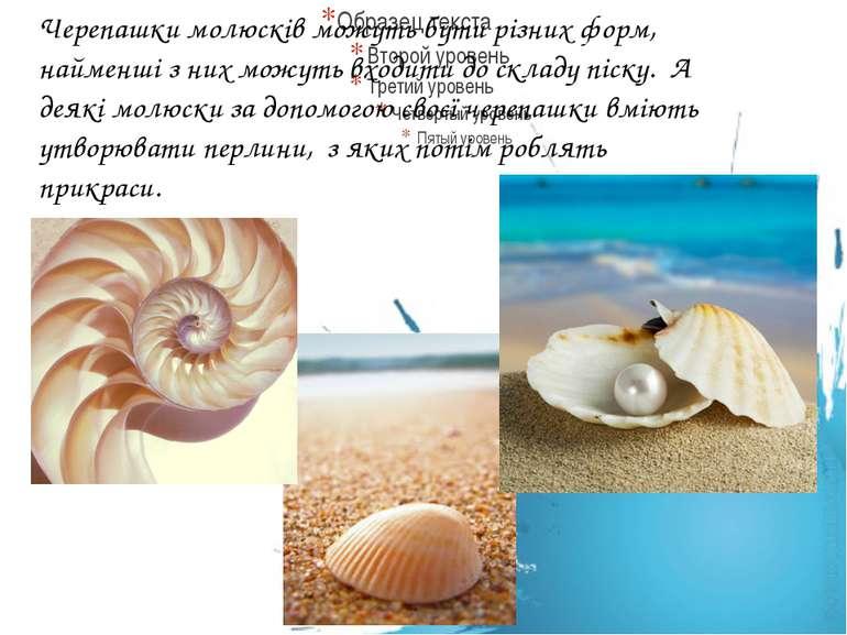 Черепашки молюсків можуть бути різних форм, найменші з них можуть входити до ...