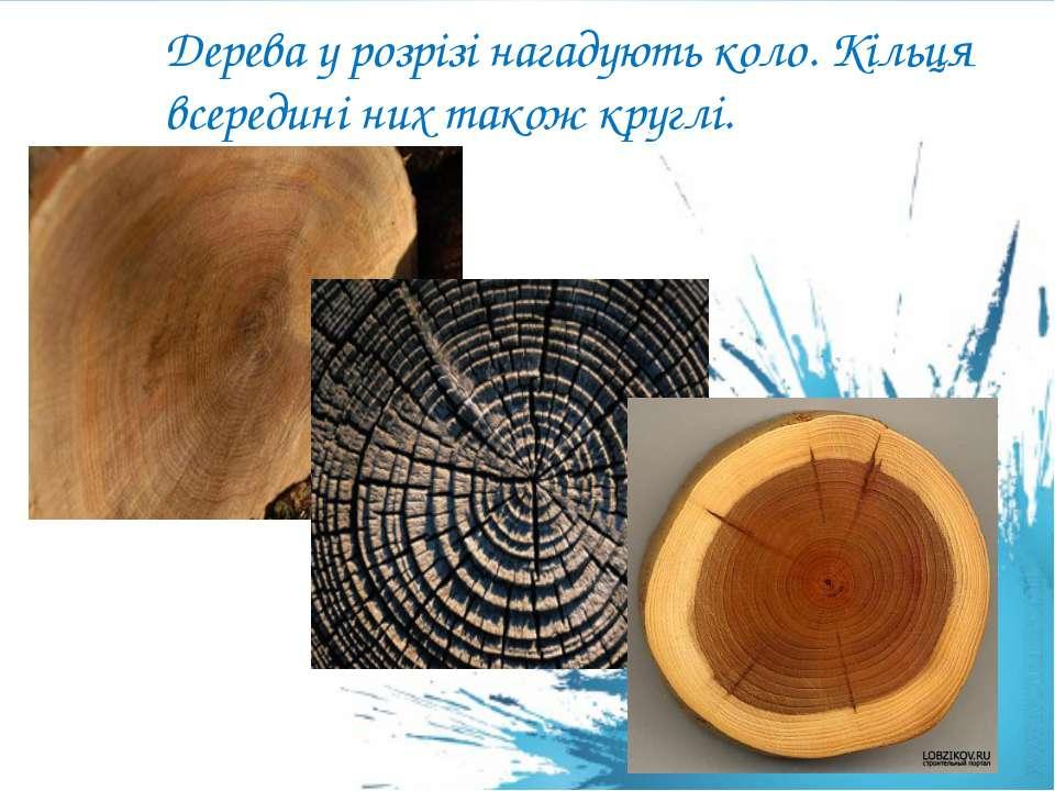 Дерева у розрізі нагадують коло. Кільця всередині них також круглі.