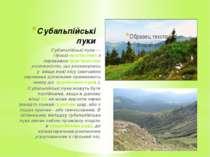 Субальпійські луки Субальпійські луки— гірськіекостистемаз переважнотрав'...