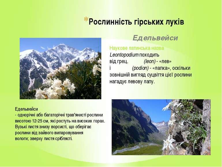 Рослинність гірських луків Едельвейси Наукове латинська назва Leontopodiumпо...