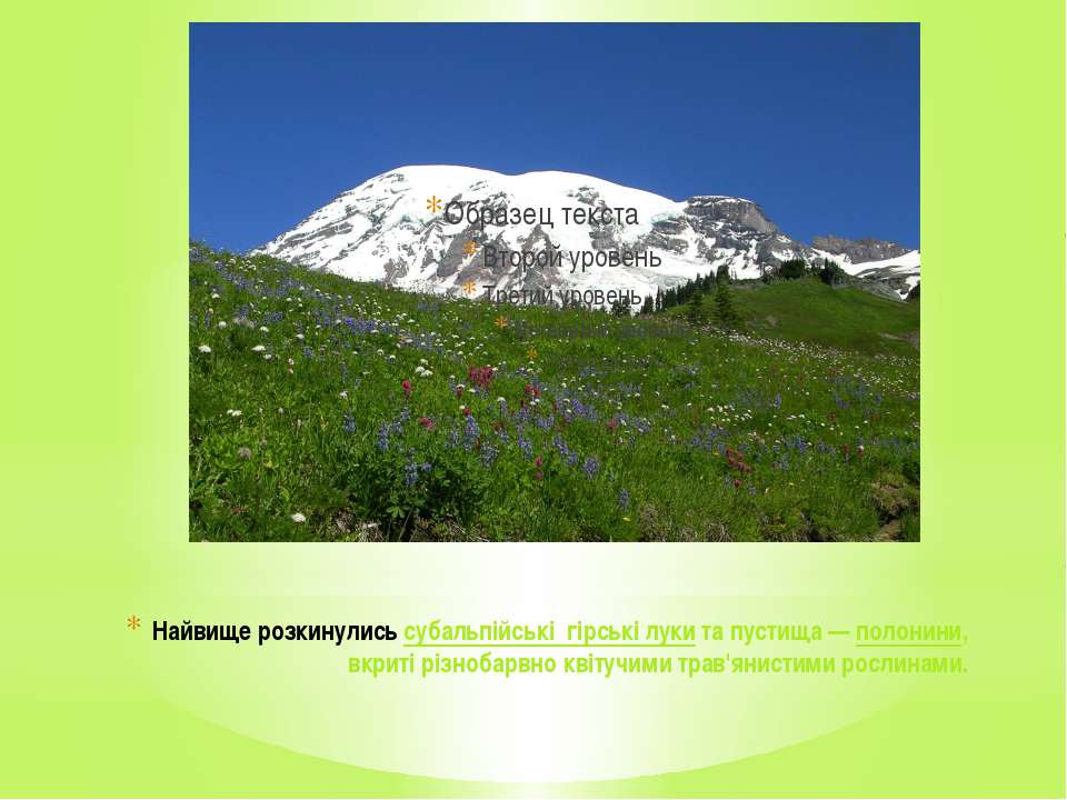 Найвище розкинулисьсубальпійські гірські лукита пустища—полонини, вкриті ...