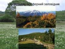 Карпатський біосферний заповідник