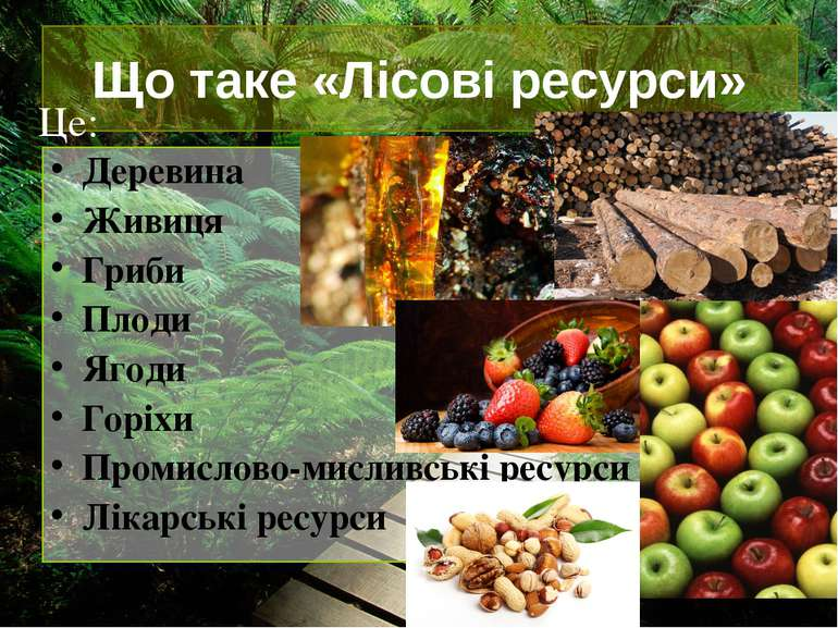 Що таке «Лісові ресурси» Деревина Живиця Гриби Плоди Ягоди Горіхи Промислово-...