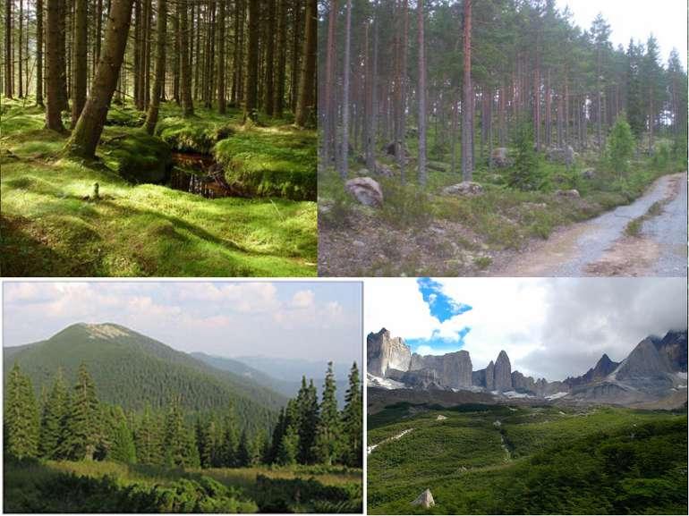 Північний лісовий пояс Росія Північна Америка: США Канада Західна Європа: Шве...