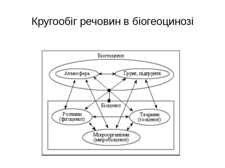 Кругообіг речовин в біогеоцинозі