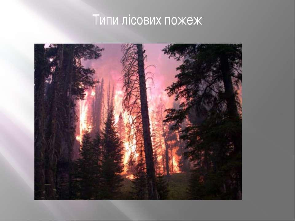 Типи лісових пожеж