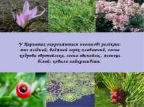 У Карпатах охороняються неогенові релікти: тис ягідний, водяний горіх плаваюч...