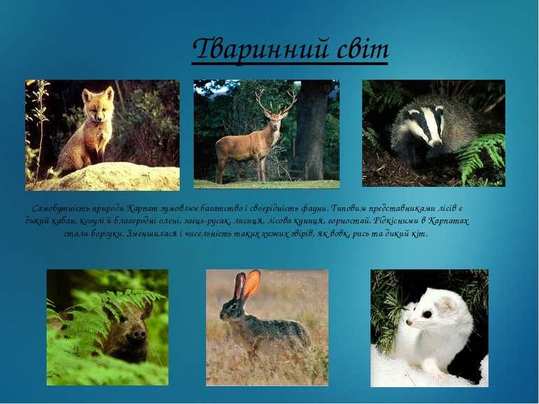 Тваринний світ Самобутність природи Карпат зумовлює багатство і своєрідність ...