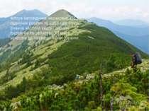 Флора заповідника нараховує 451 вид судинних рослин та 235 видів мохів. Значн...
