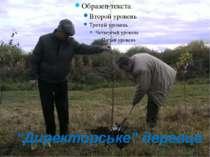 """""""Директорське"""" деревце"""