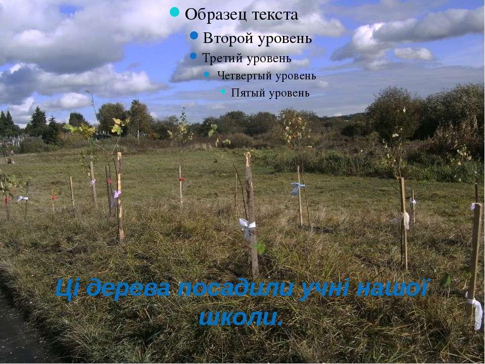 Ці дерева посадили учні нашої школи.