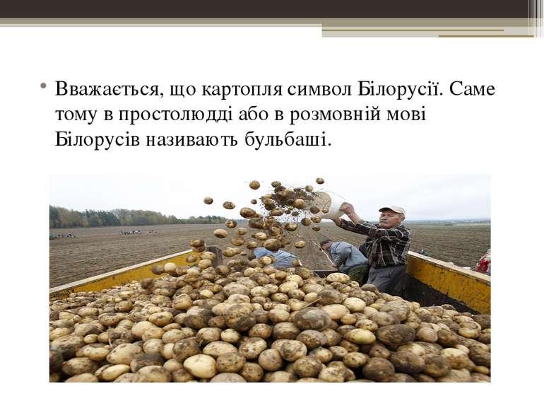 Вважається, що картопля символ Білорусії. Саме тому в простолюдді або в розмо...