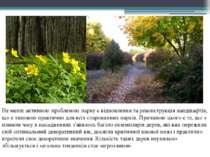 Не менш активною проблемою парку є відновлення та реконструкція ландшафтів, щ...