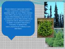 Для рослинності характерна наявність таких ендемічних американських деревних ...