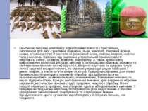 Основною галуззю комплексу легкої промисловості є текстильна, сировиною для я...
