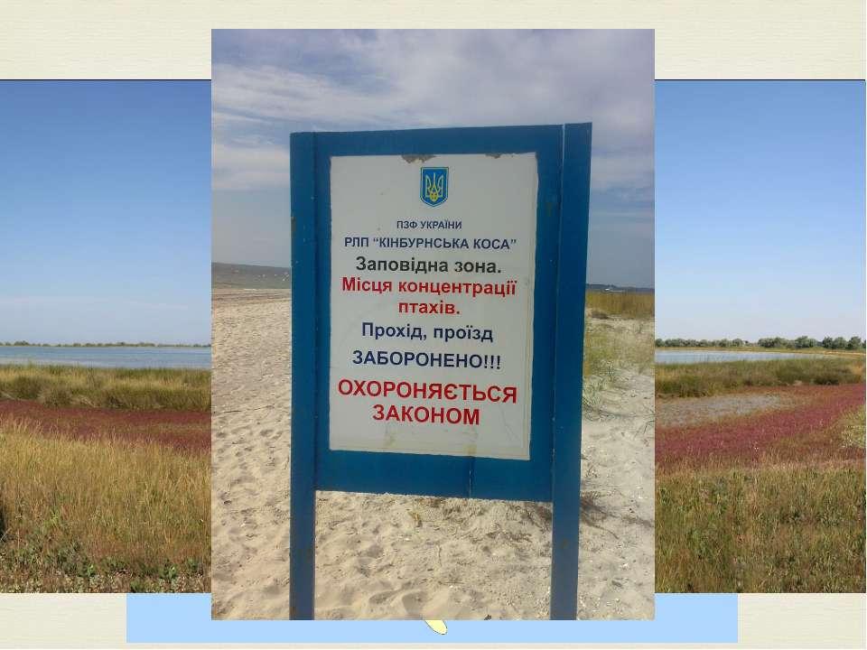 Піщанакоса, розташована вОчаківському районіМиколаївської області. Займає ...