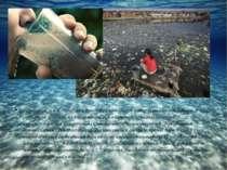 Гідросфера землі - найбільш вразливий компонент навколишнього середовища. З р...