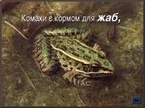 Комахи є кормом для жаб,