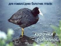 для комахоїдних болотних птахів: курочки болотної,