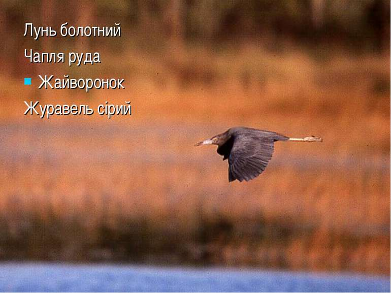 Лунь болотний Чапля руда Жайворонок Журавель сірий