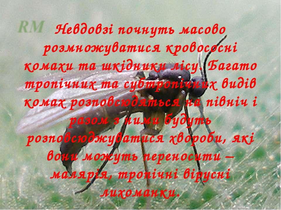 Невдовзі почнуть масово розмножуватися кровососні комахи та шкідники лісу. Ба...