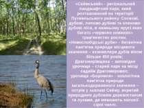 «Сеймський» - регіональний ландшафтний парк, який розташований на території П...